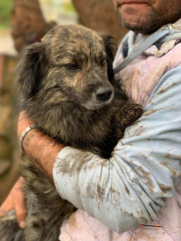Eliott (ex Woufy) - mâle- dans la maison abandonnée à Târgu Frumos- réservé adoption 67 57076111