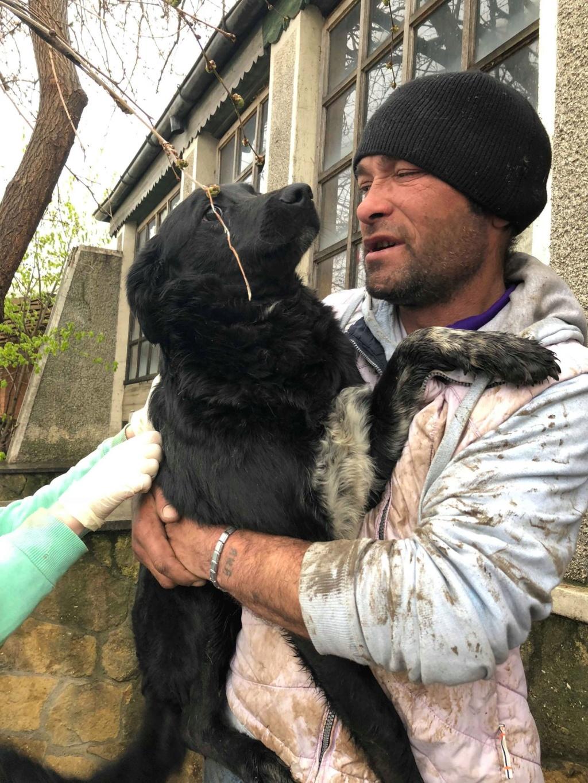 Brent-mâle- dans la maison abandonnée à Târgu Frumos 57083512