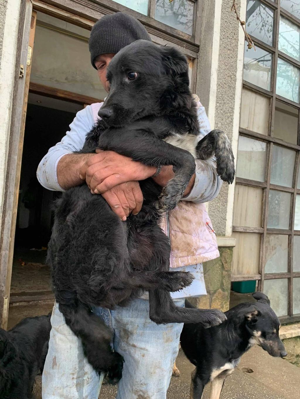 Brent-mâle- dans la maison abandonnée à Târgu Frumos 57097011