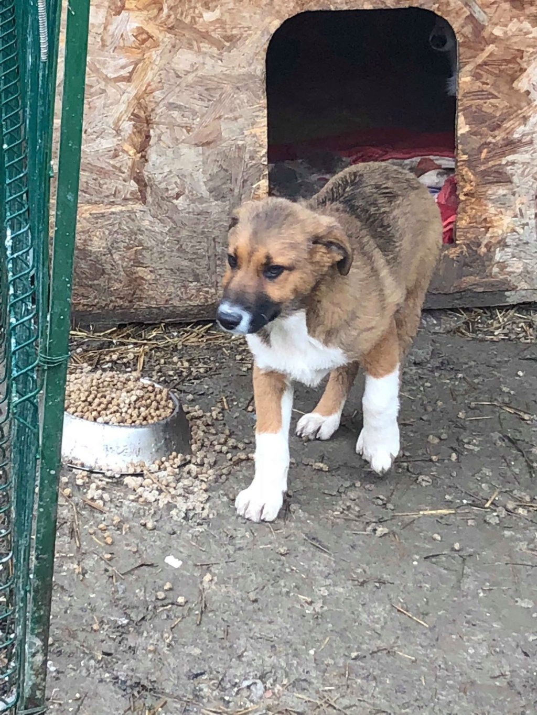 Toby- mâle-refuge de Targu Frûmos - réservé adoption 67 57098911