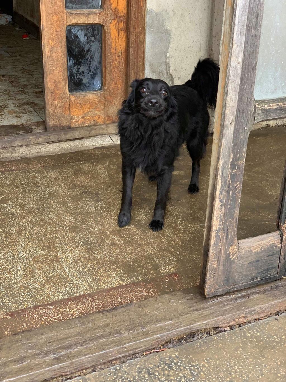 Olga- dans la maison abandonnée à Târgu Frumos 57111011