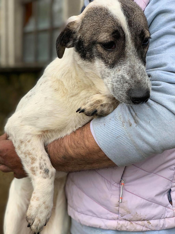 Nala (ex-Louisiana)- femelle- adoptée dans le 67 57113110