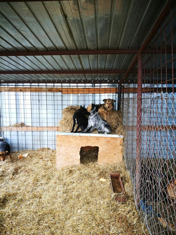 Speedy - femelle - fourrière de Târgu Frumos 57114811