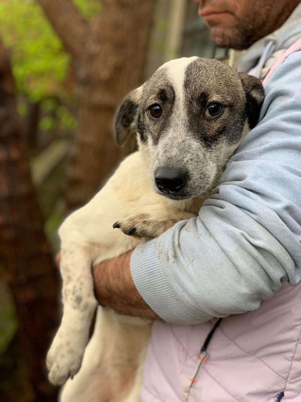 Nala (ex-Louisiana)- femelle- adoptée dans le 67 57116310