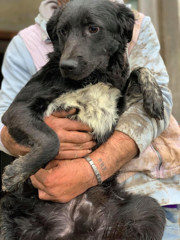 Brent-mâle- dans la maison abandonnée à Târgu Frumos 57121011