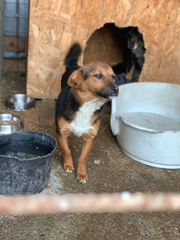 Tartine (ex-Panzani) - femelle - fourrière de Târgu Frumos - Réservée adoption (69) 57122210