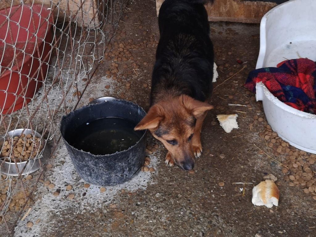 Tartine (ex-Panzani) - femelle - fourrière de Târgu Frumos - Réservée adoption (69) 57154410