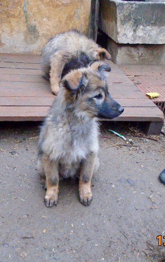 Lalena- femelle- refuge d'Arad - adoptée par sa FA 57161012