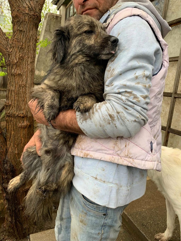 Eliott (ex Woufy) - mâle- dans la maison abandonnée à Târgu Frumos- réservé adoption 67 57164012