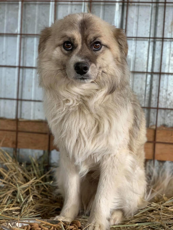 Vulpe - mâle - fourrière de Târgu Frumos 57166012