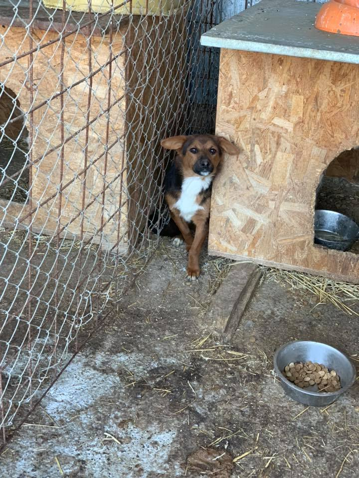 Tartine (ex-Panzani) - femelle - fourrière de Târgu Frumos - Réservée adoption (69) 57174912