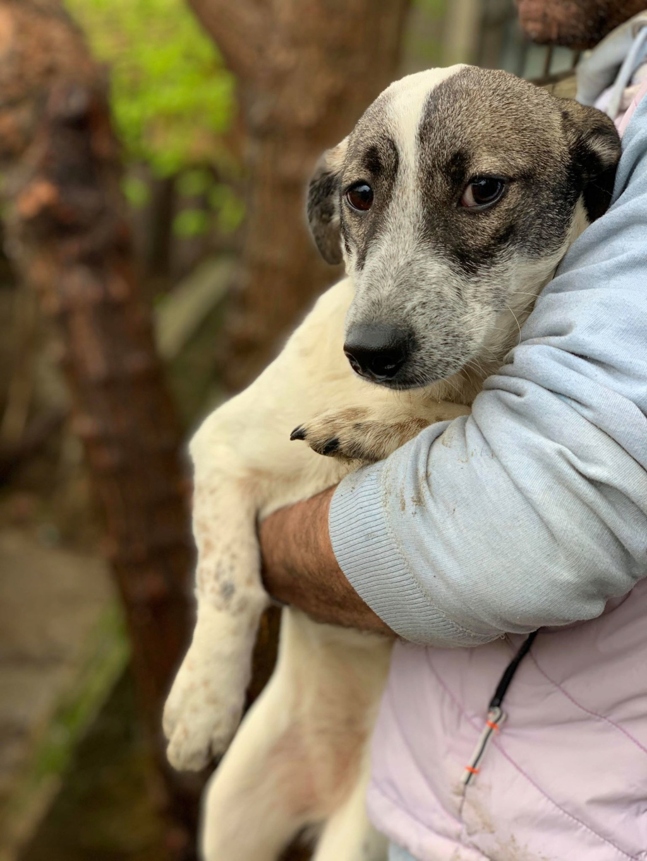 Nala (ex-Louisiana)- femelle- adoptée dans le 67 57183712