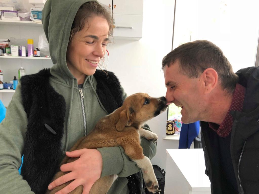 Stanley- mâle- refuge de Targu Frûmos - réservé adoption (67) 57183811