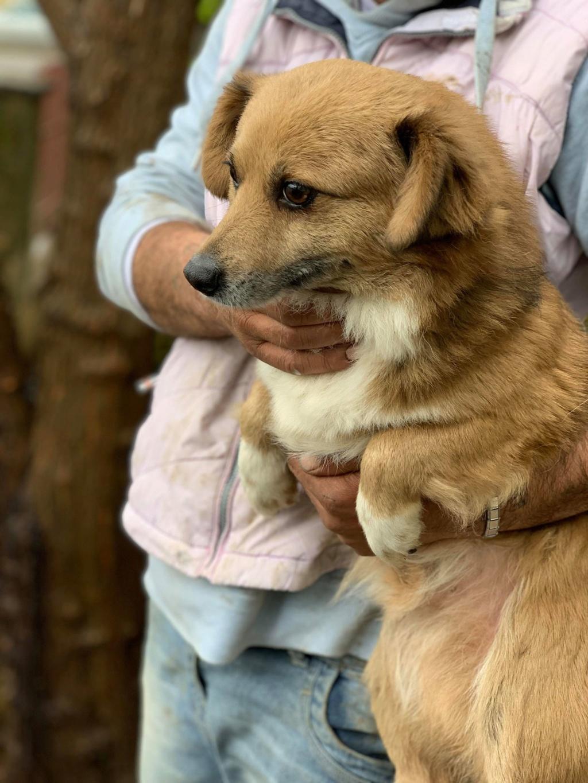 Aiko- mâle -dans la maison abandonnée de Târgu Frumos 57187513