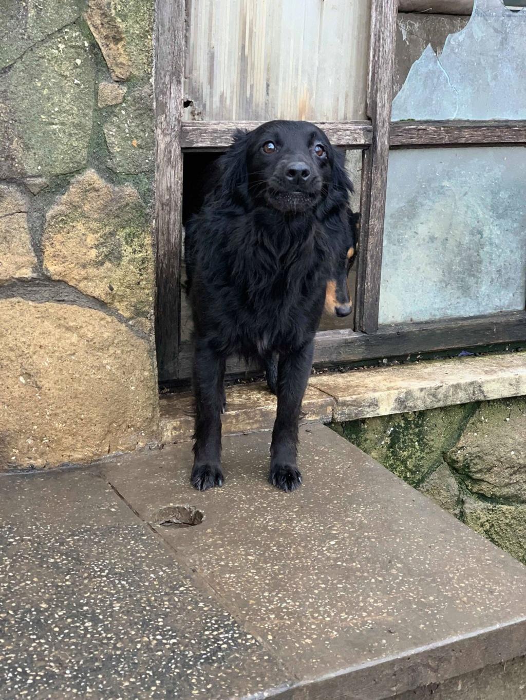 Olga- dans la maison abandonnée à Târgu Frumos 57213812