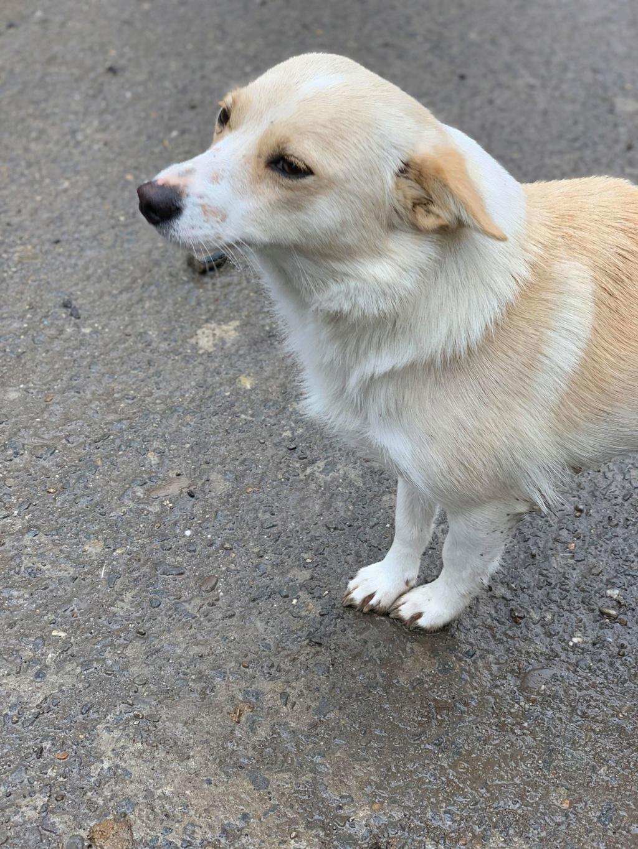 Nesta (ex-Asia) - femelle- Fourrière de Târgu Frumos - réservée adoption (68) 57216711