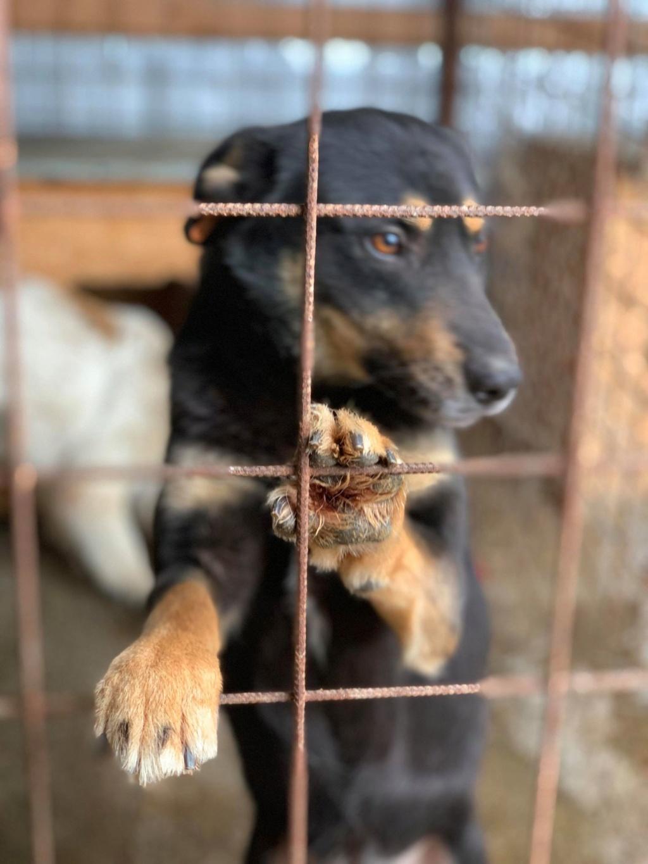 Texas - mâle - fourrière de Târgu Frumos 57226311