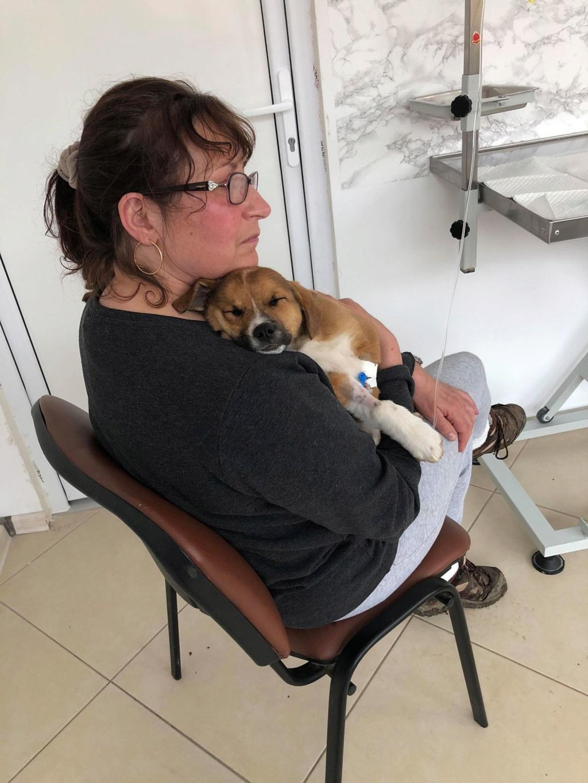 Stanley- mâle- refuge de Targu Frûmos - réservé adoption (67) 57251211