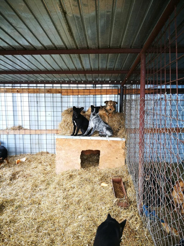 Speedy - femelle - fourrière de Târgu Frumos 57253412