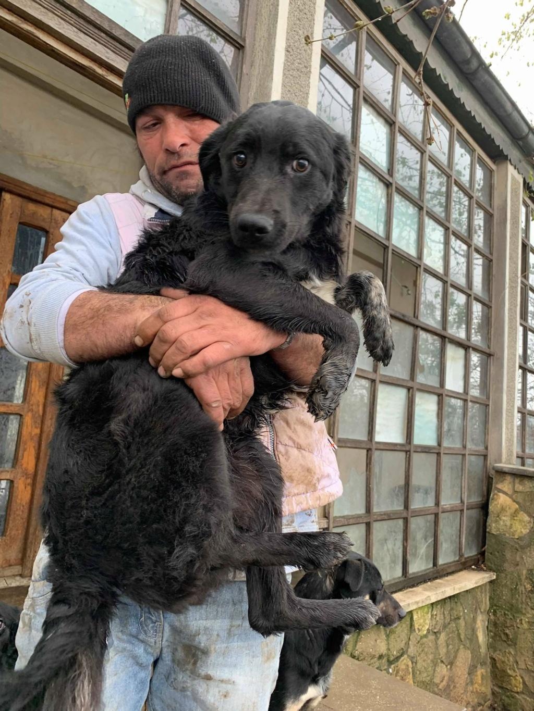 Brent-mâle- dans la maison abandonnée à Târgu Frumos 57258213