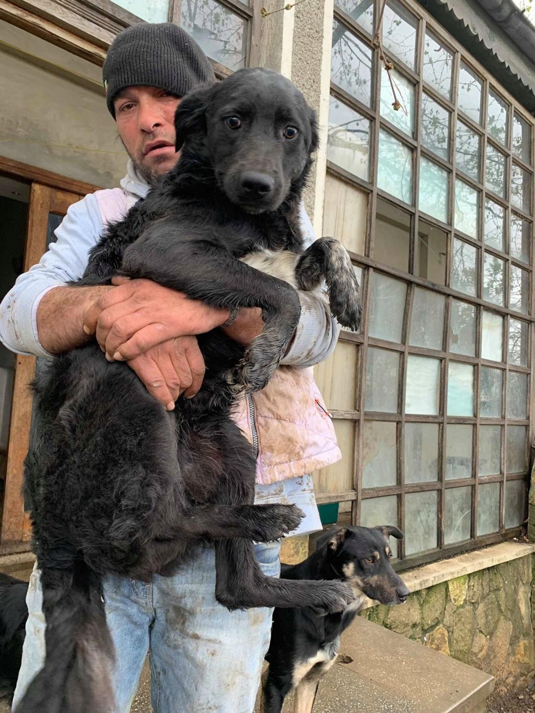 Brent-mâle- dans la maison abandonnée à Târgu Frumos 57272212