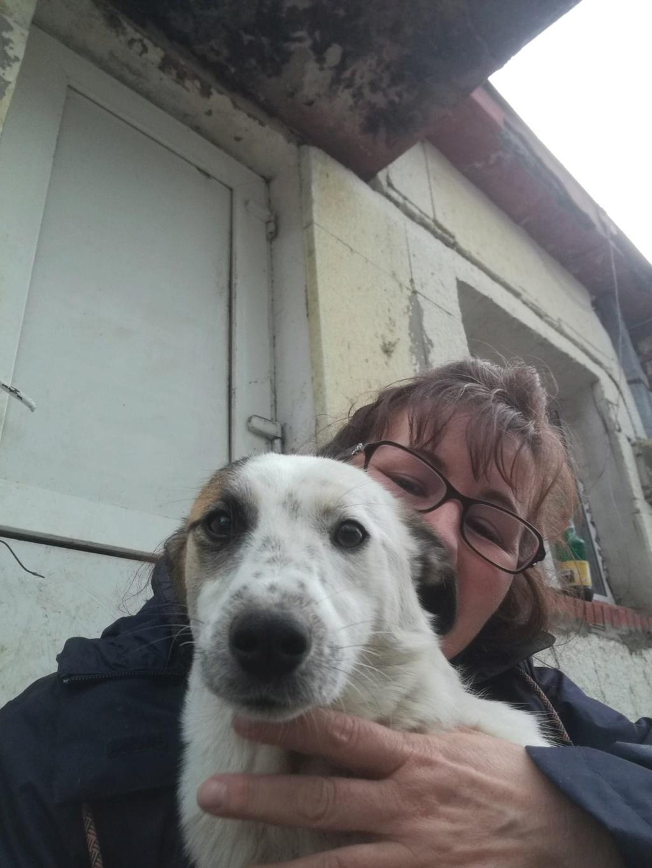 Pimkie- femelle- fourrière de Targû Frumos - sera en famille d'accueil dans le 67 en mai 57284413