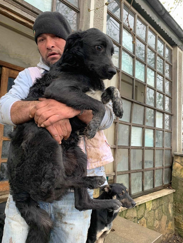 Brent-mâle- dans la maison abandonnée à Târgu Frumos 57289411