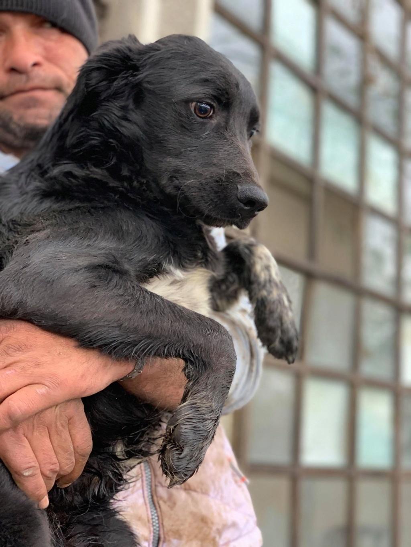 Brent-mâle- dans la maison abandonnée à Târgu Frumos 57291111