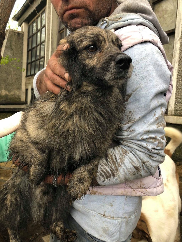 Eliott (ex Woufy) - mâle- dans la maison abandonnée à Târgu Frumos- réservé adoption 67 57297811