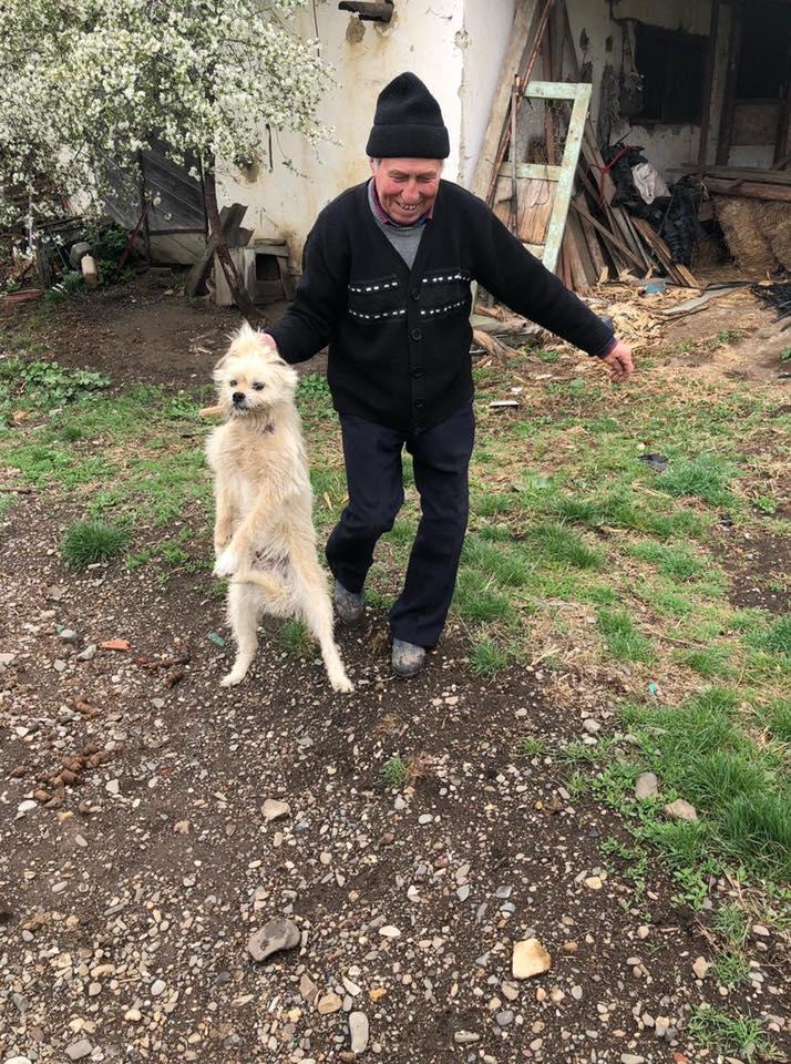 Benji (ex Gédeon) - mâle - fourrière de Târgu Frumos - Réservé (67)  57305910