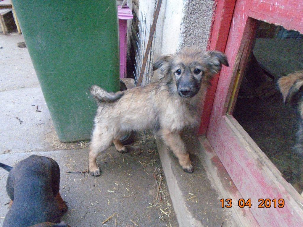 Lalena- femelle- refuge d'Arad - adoptée par sa FA 57308510