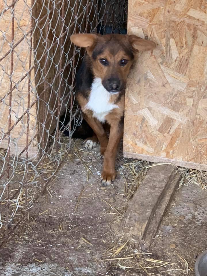 Tartine (ex-Panzani) - femelle - fourrière de Târgu Frumos - Réservée adoption (69) 57325211
