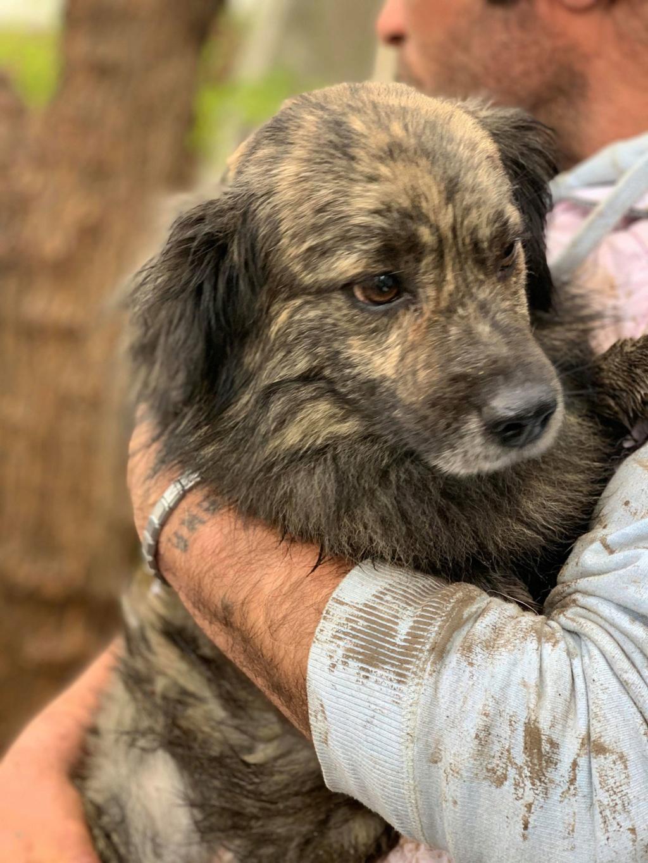 Eliott (ex Woufy) - mâle- dans la maison abandonnée à Târgu Frumos- réservé adoption 67 57326212