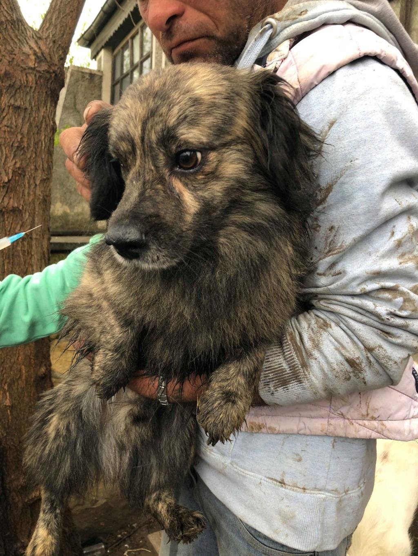 Eliott (ex Woufy) - mâle- dans la maison abandonnée à Târgu Frumos- réservé adoption 67 57355514