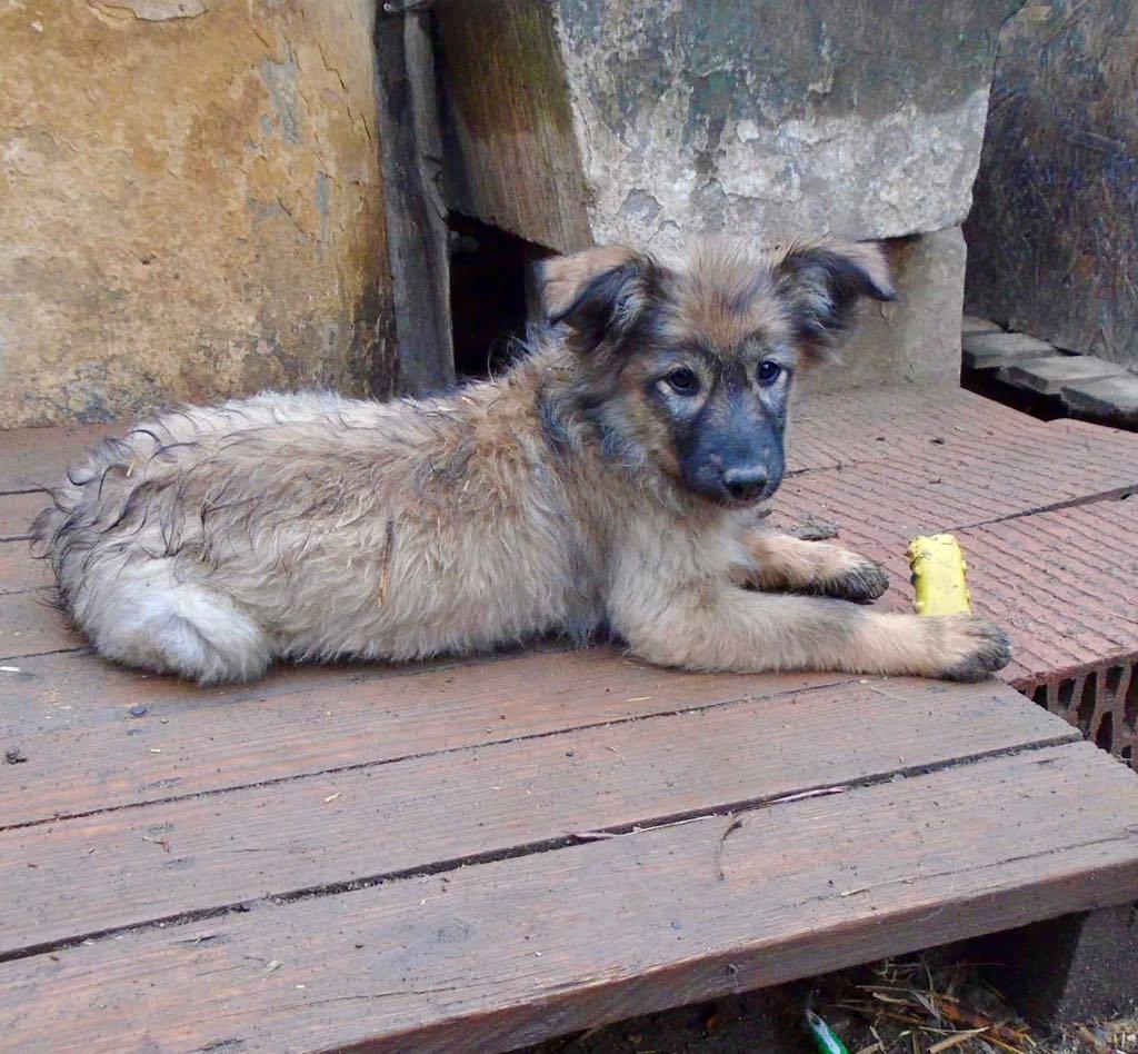 Lalena- femelle- refuge d'Arad - adoptée par sa FA 57393110