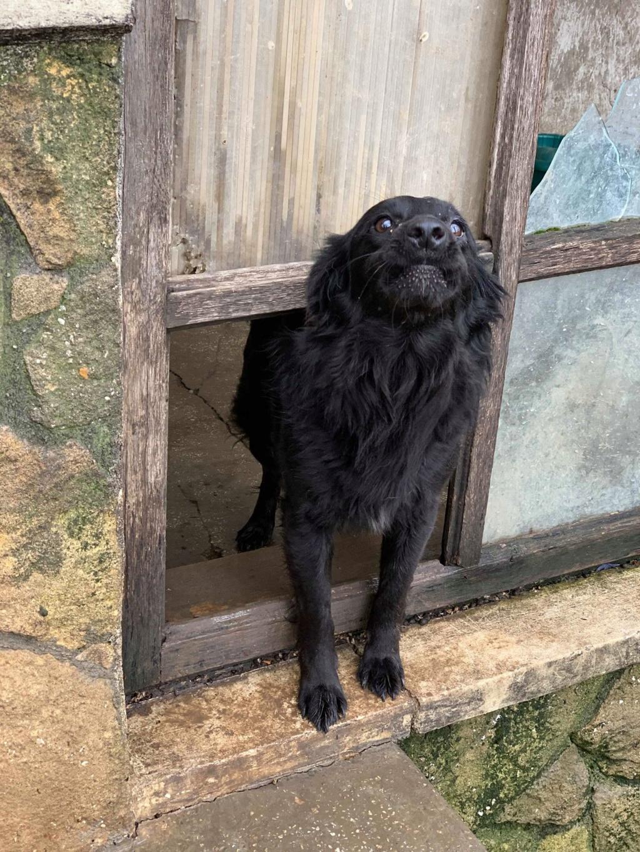 Olga- dans la maison abandonnée à Târgu Frumos 57427410