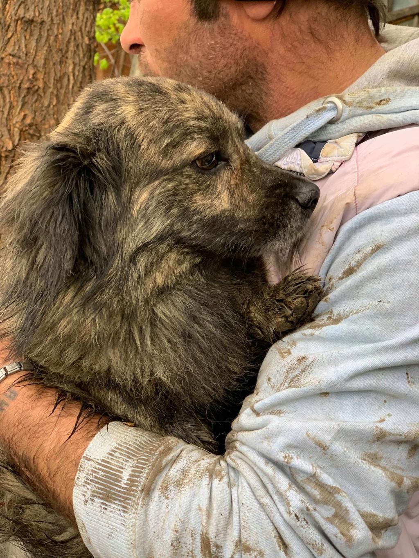 Eliott (ex Woufy) - mâle- dans la maison abandonnée à Târgu Frumos- réservé adoption 67 57430310