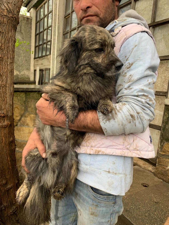 Eliott (ex Woufy) - mâle- dans la maison abandonnée à Târgu Frumos- réservé adoption 67 57451111