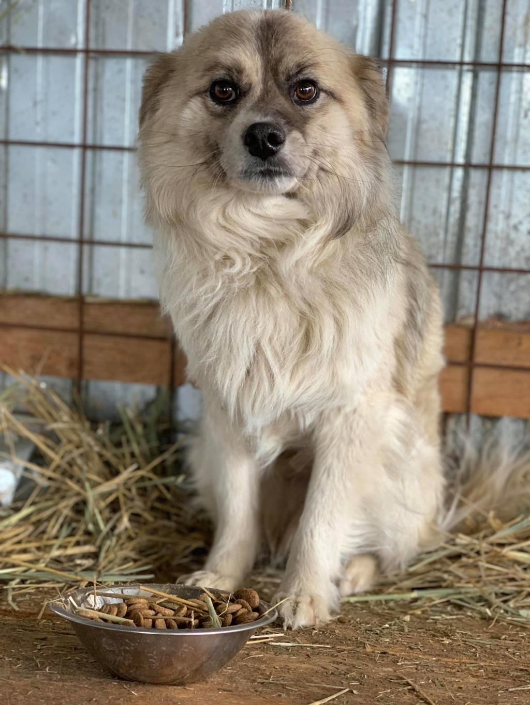 Vulpe - mâle - fourrière de Târgu Frumos 57467810