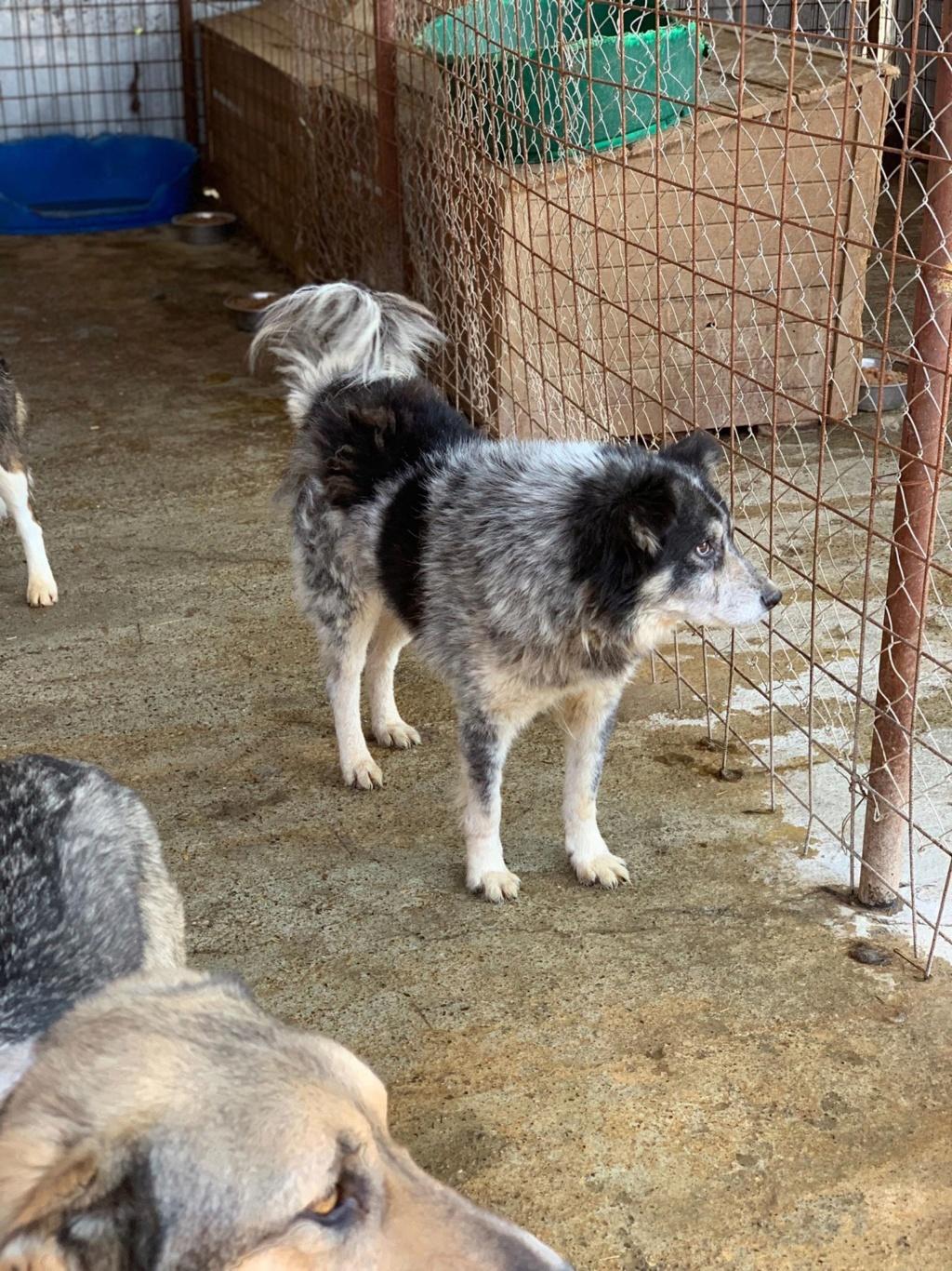 Scottie - mâle - Fourrière de Târgu Frumos - Frais d'adoption réduits - En famille d'accueil dans le 67 57471910