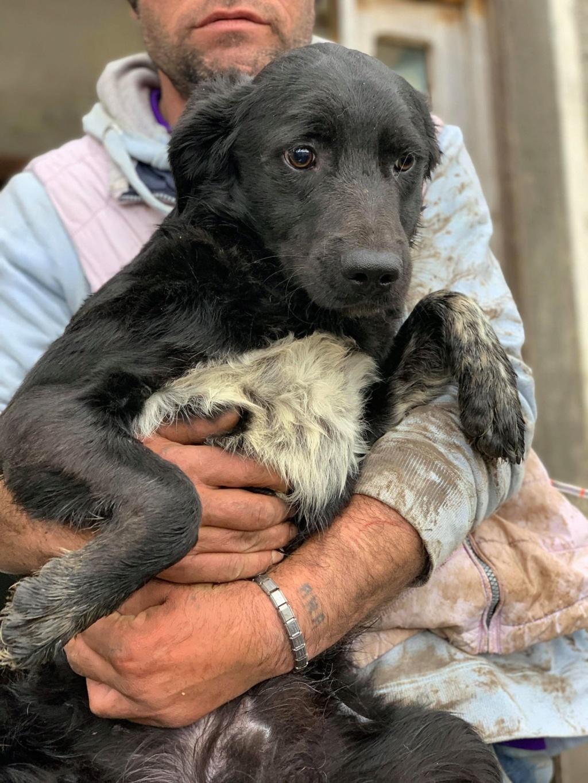 Brent-mâle- dans la maison abandonnée à Târgu Frumos 57484712