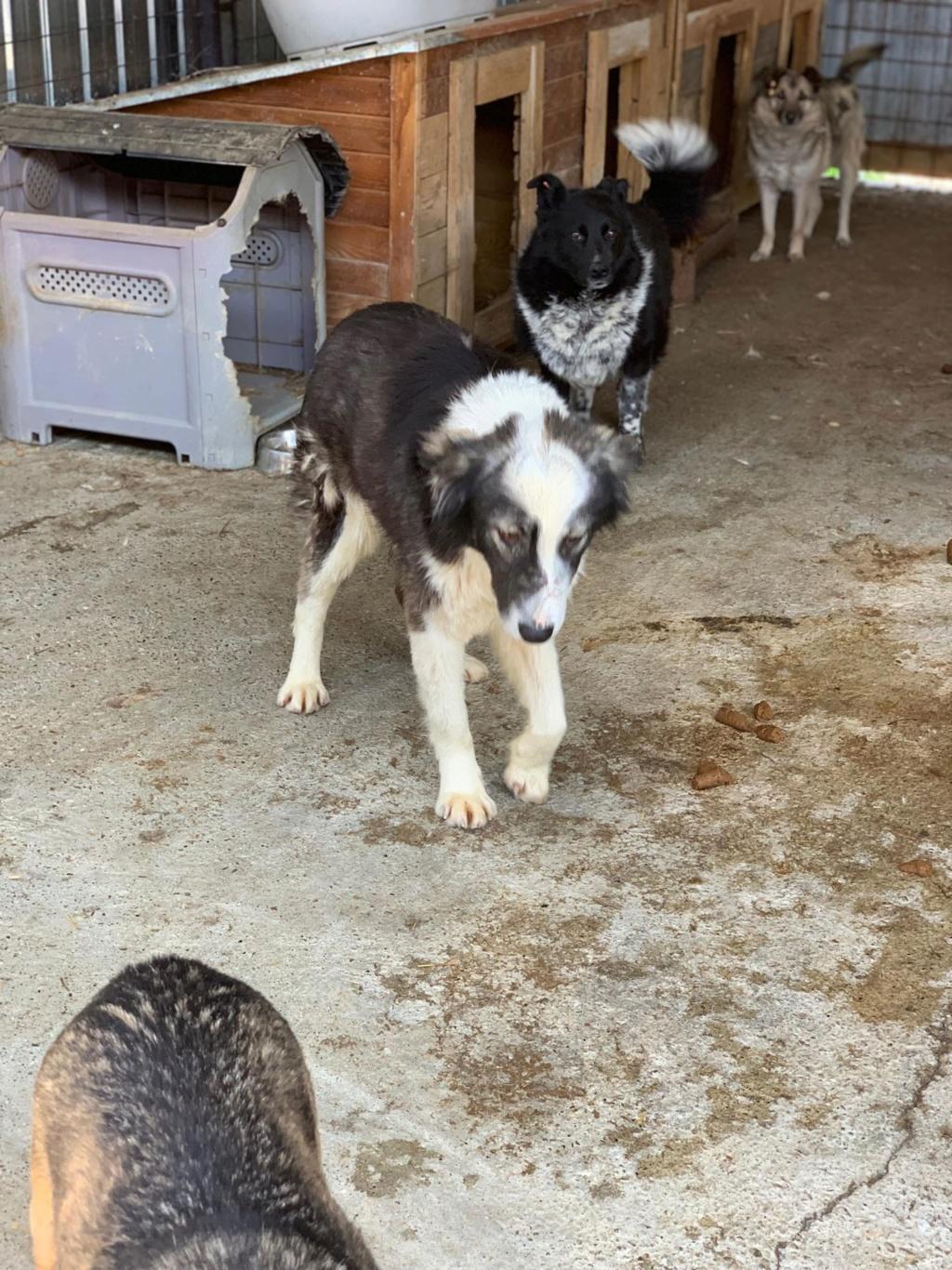 Everest - femelle - fourrière de Târgu Frumos - sera en famille d'accueil dans le 67 en mai 57485310
