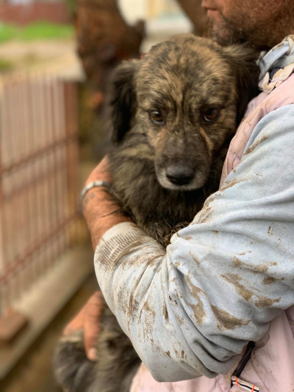 Eliott (ex Woufy) - mâle- dans la maison abandonnée à Târgu Frumos- réservé adoption 67 57486210