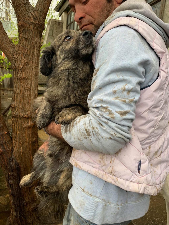 Eliott (ex Woufy) - mâle- dans la maison abandonnée à Târgu Frumos- réservé adoption 67 57490311