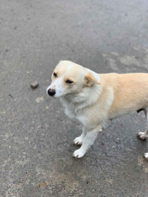 Nesta (ex-Asia) - femelle- Fourrière de Târgu Frumos - réservée adoption (68) 57503410
