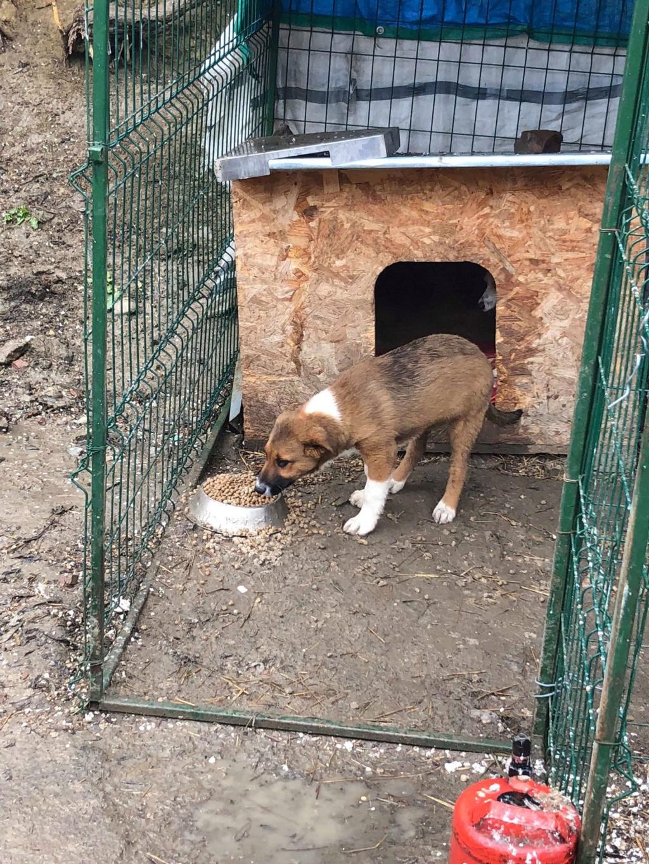 Toby- mâle-refuge de Targu Frûmos - réservé adoption 67 57503411