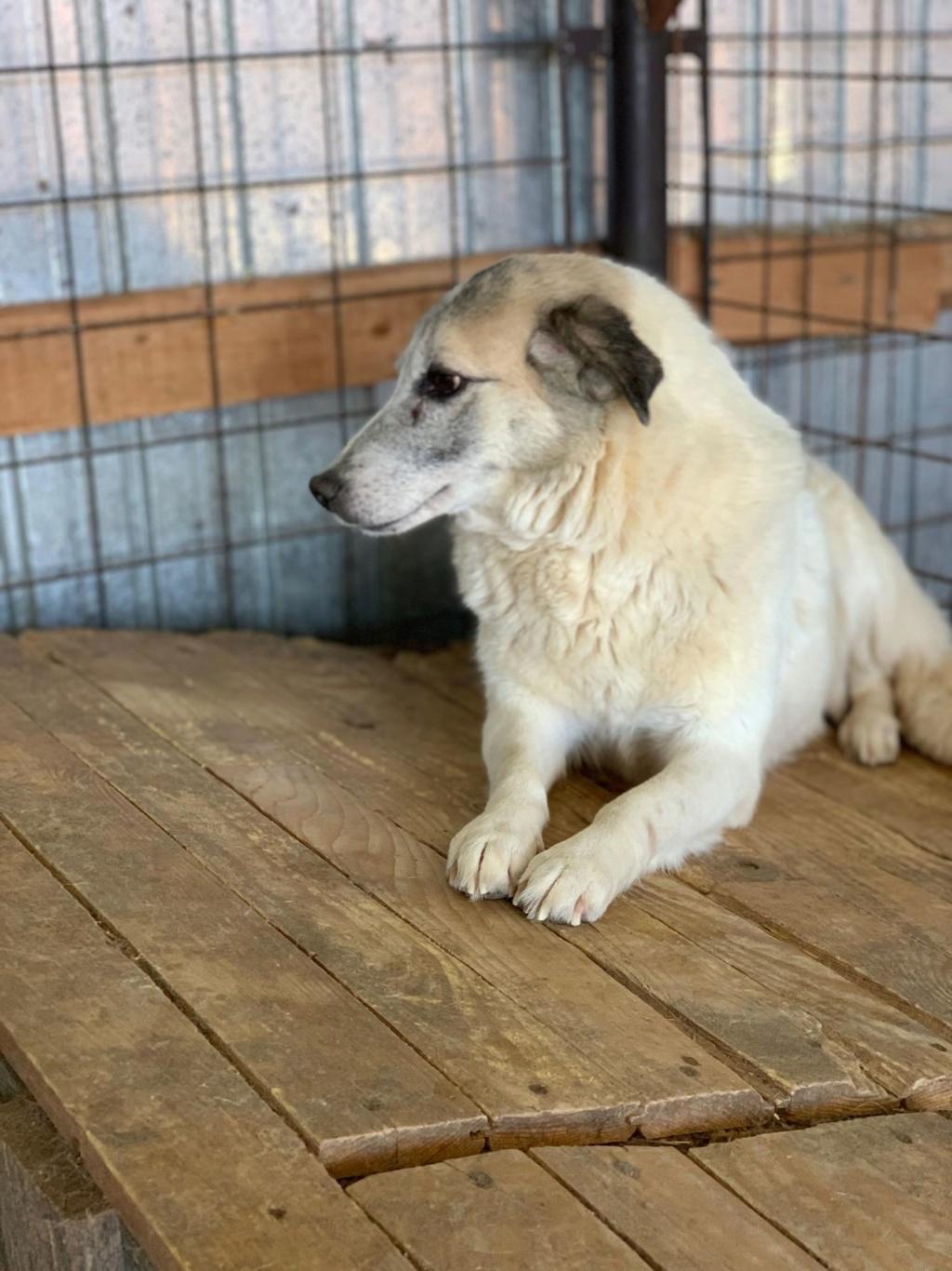 Anouchka - femelle - fourrière de Târgu Frumos 57546411