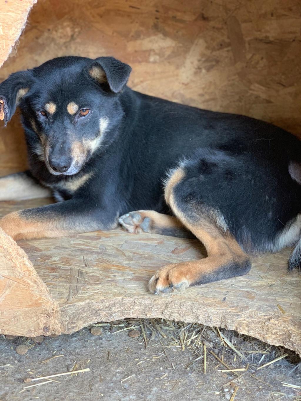 Texas - mâle - fourrière de Târgu Frumos 57548410