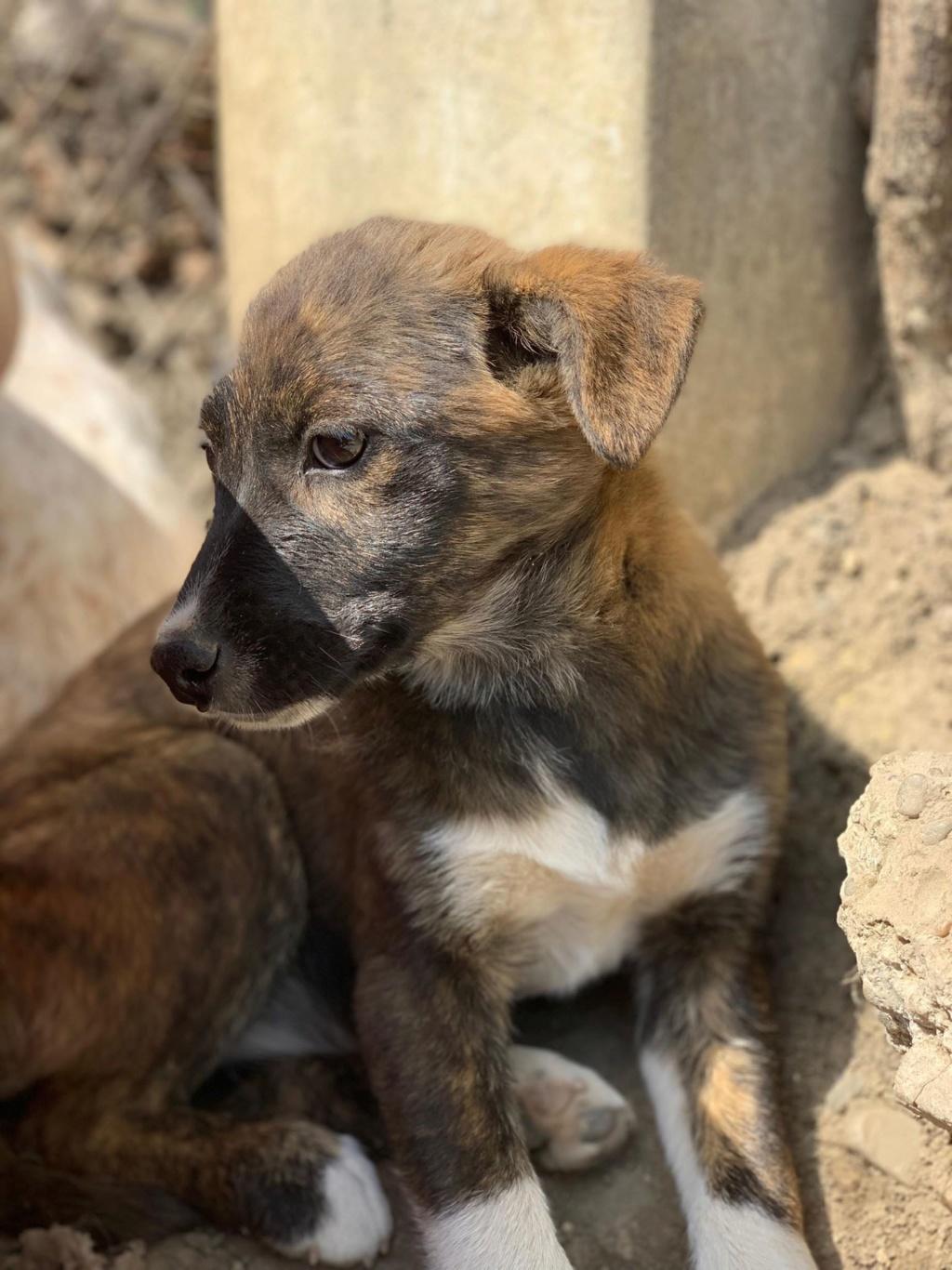 Maya (ex-Amara) - femelle - à la boulangerie (Târgu Frumos) - réservée adoption 67 57568411