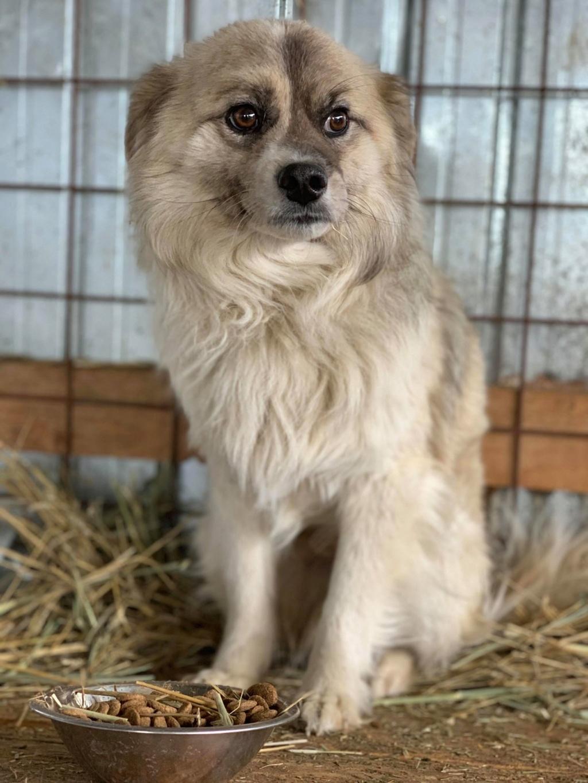 Vulpe - mâle - fourrière de Târgu Frumos 57583110